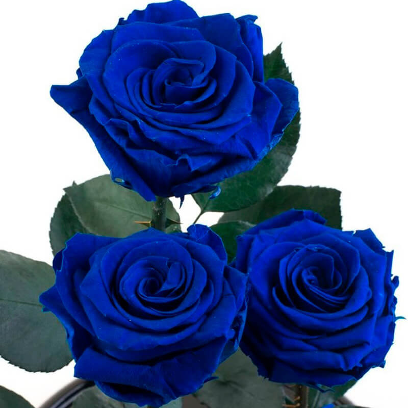 Про экзамен, открытки синими розами